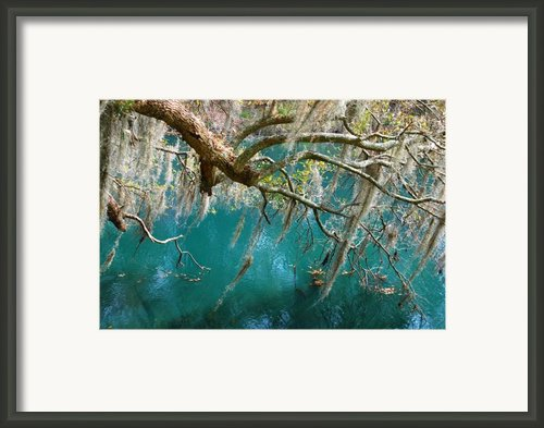 Spanish Moss And Emerald Green Water Framed Print By Susanne Van Hulst