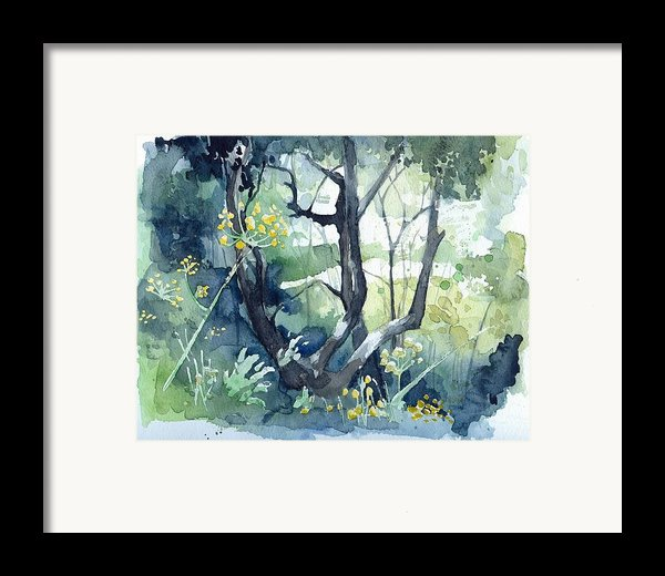 Spanish Olive Trees Framed Print By Stephanie Aarons