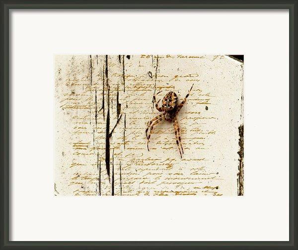 Spider Letter Framed Print By Yvon -aka- Yanieck  Mariani