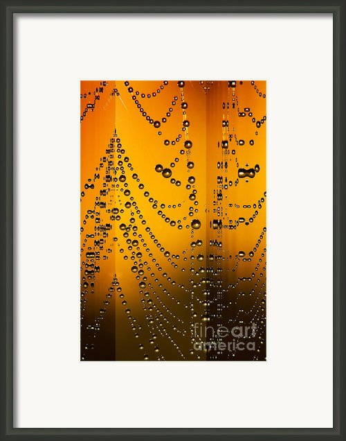 Spider Web Reflections Framed Print By Odon Czintos