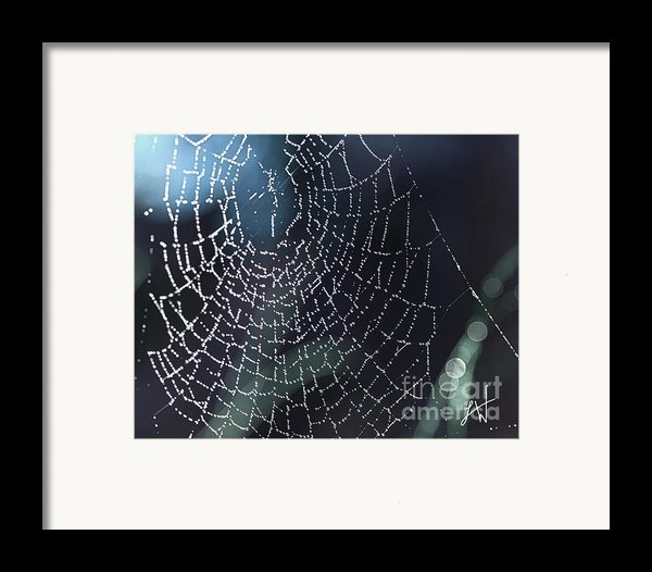 Spiderweb Blues Framed Print By Artist And Photographer Laura Wrede