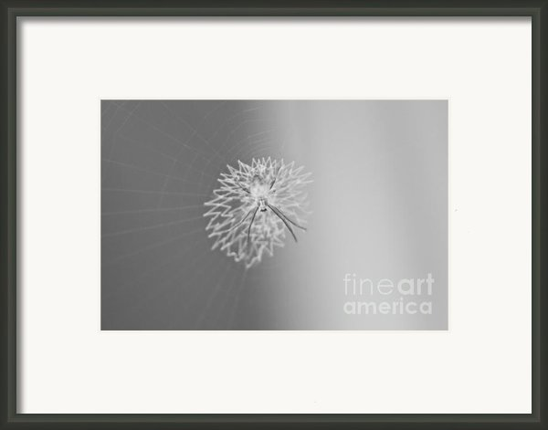 Spiderweb Framed Print By Cesar Marino