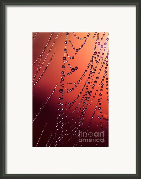 Spiderweb In Red Framed Print By Odon Czintos