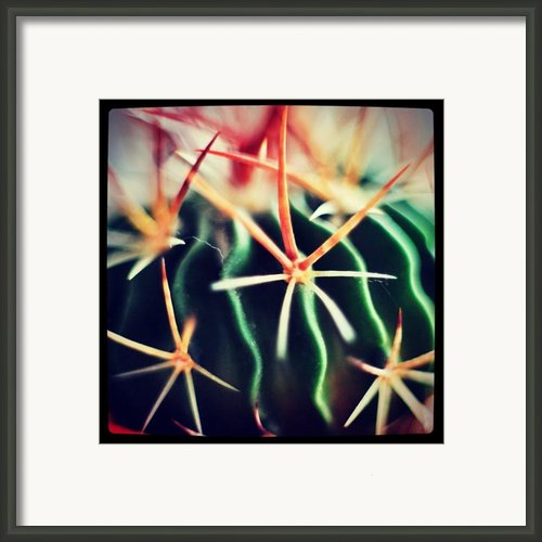 #spikes #green #plant #igaddict Framed Print By Ritchie Garrod