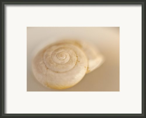Spiral Shell Framed Print By Scott Norris