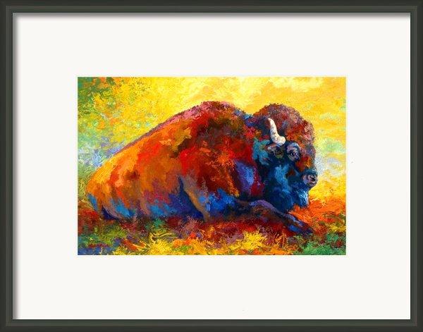 Spirit Brother - Bison Framed Print By Marion Rose
