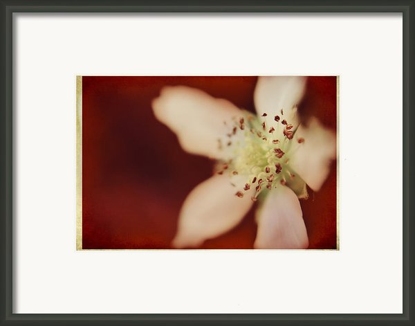 Spirit Framed Print By Laurie Search