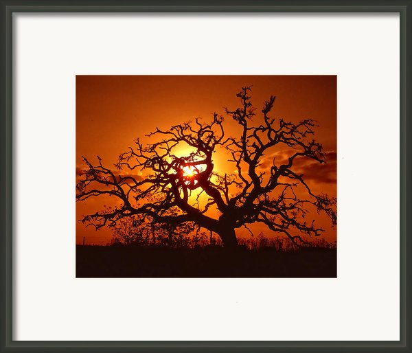 Spooky Tree Framed Print By Stephen Anderson