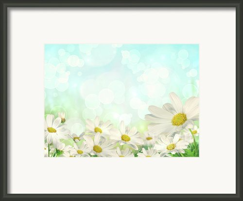 Spring Background With Daisies Framed Print By Sandra Cunningham