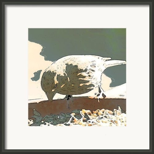Spring Bird Framed Print By Author And Photographer Laura Wrede