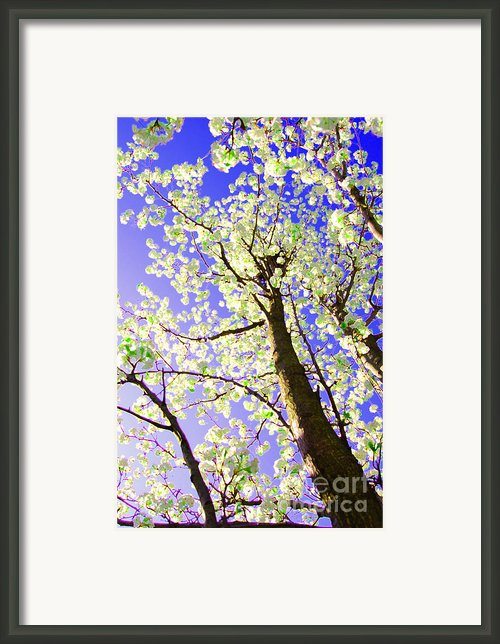 Spring Blossoms   Framed Print By First Star Art