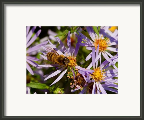 Spring Buzz Framed Print By Carol Todd