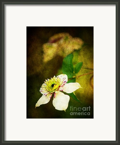 Spring Charm Framed Print By Darren Fisher