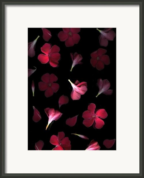 Spring Framed Print By Christian Slanec