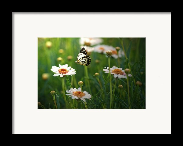 Spring In Air. Framed Print By Photos By Shmelly