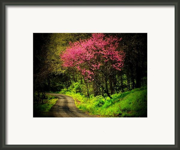 Spring Mountain Road Framed Print By Michael L Kimble