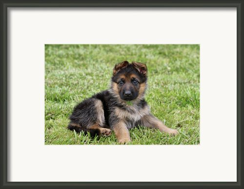 Spring Puppy Framed Print By Sandy Keeton