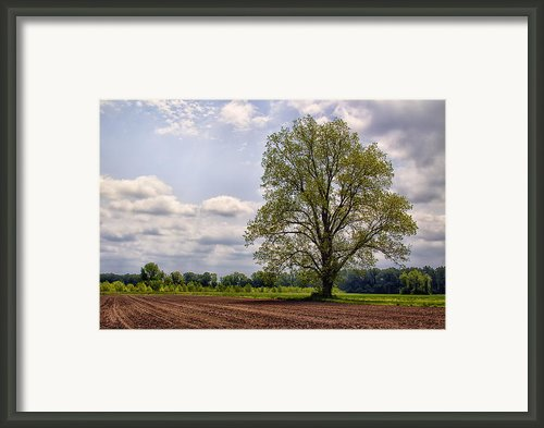 Spring Shade Tree Framed Print By Bill Tiepelman