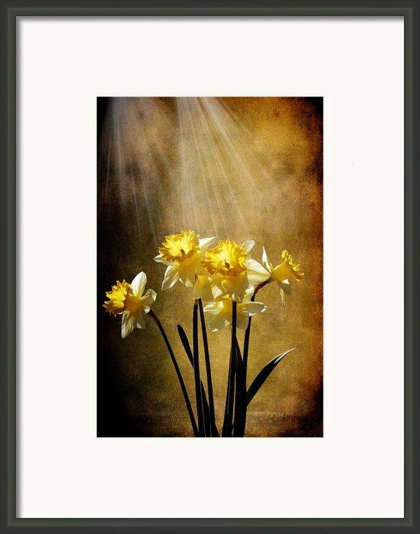 Spring Sun Framed Print By Lois Bryan