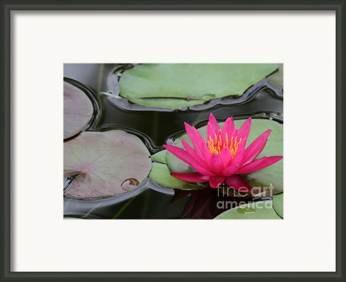 Spring Water Lily Framed Print By Sabrina L Ryan