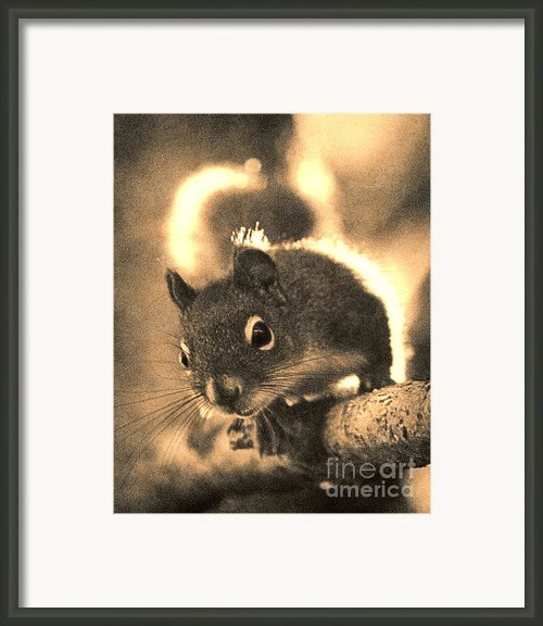 Squirrel In Sepia Framed Print By Janeen Wassink Searles