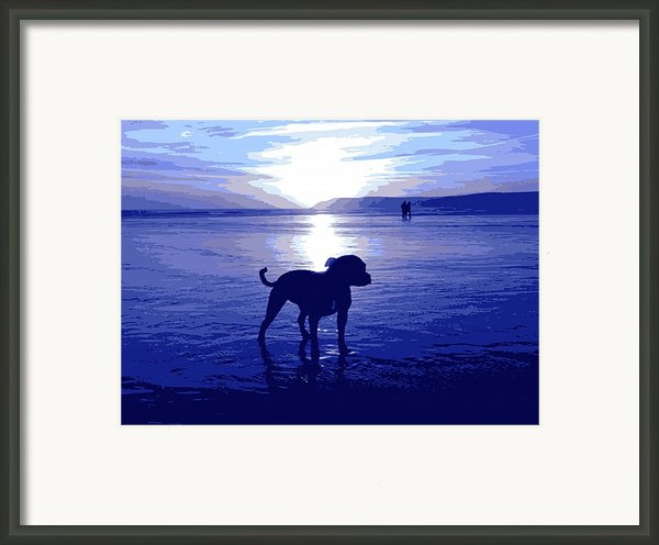 Staffordshire Bull Terrier On Beach Framed Print By Michael Tompsett