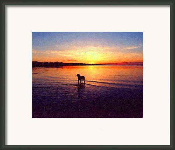 Staffordshire Bull Terrier On Lake Framed Print By Michael Tompsett