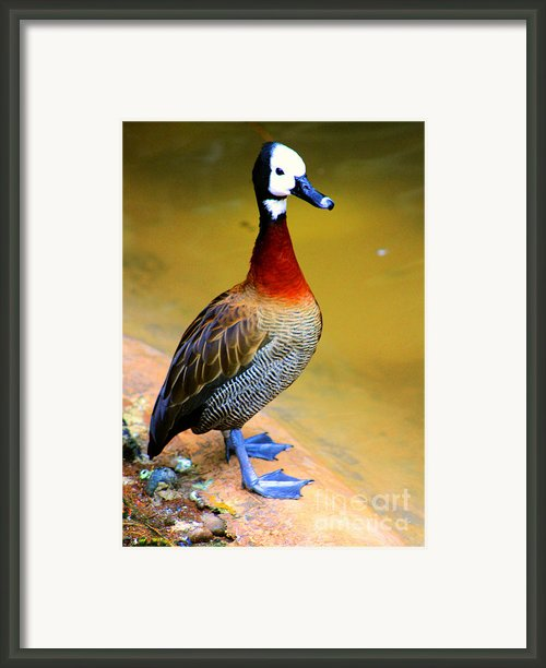 Standing Tall Framed Print By Nick Gustafson