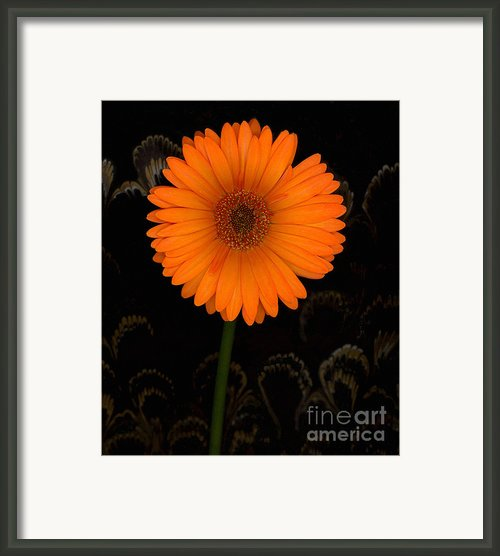 Standing Tall Framed Print By Suzanne Gaff