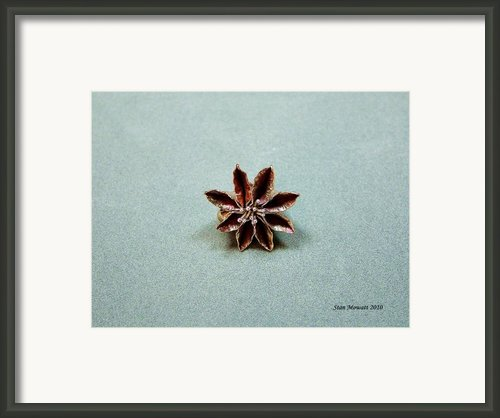 Star Flower Framed Print By Stan Mowatt
