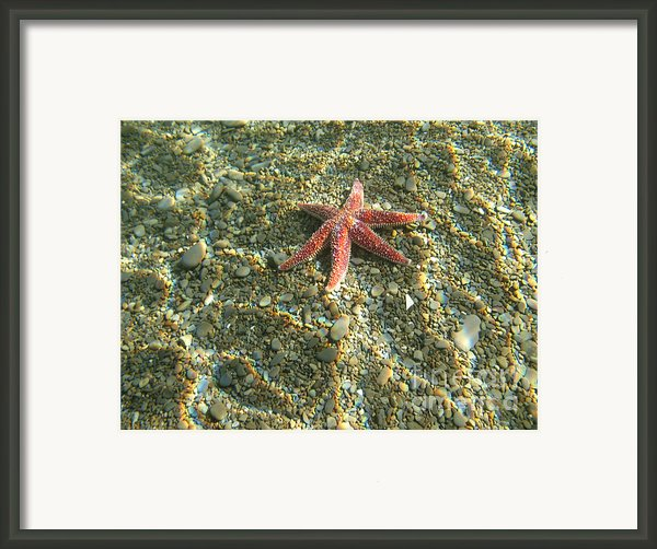 Starfish In Shallow Water Framed Print By Ted Kinsman