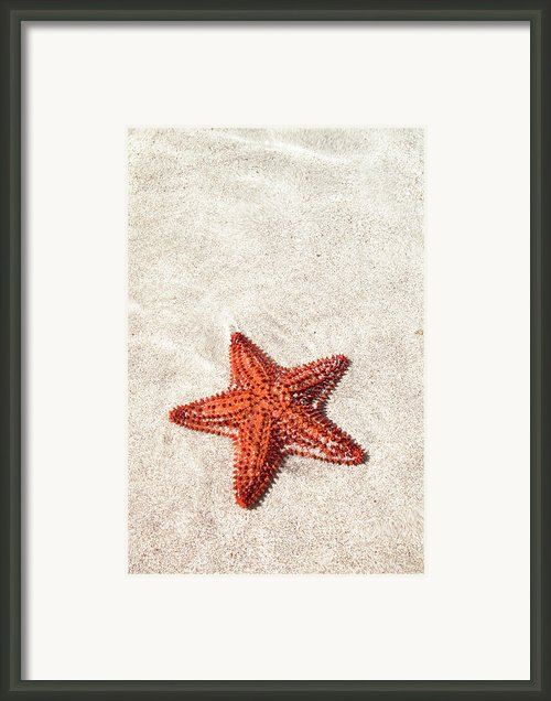 Starfish Under Water Framed Print By Matteo Colombo