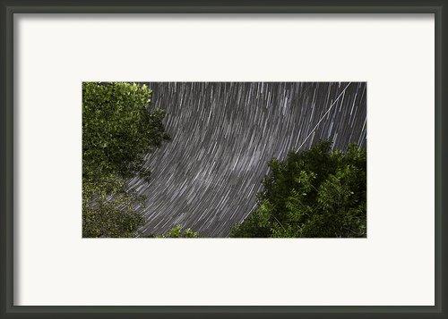 Startrails Above Tree Framed Print By Cristian Mihaila