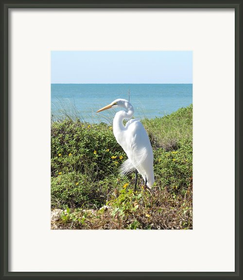 Statuesque Heron Framed Print By Chris Andruskiewicz