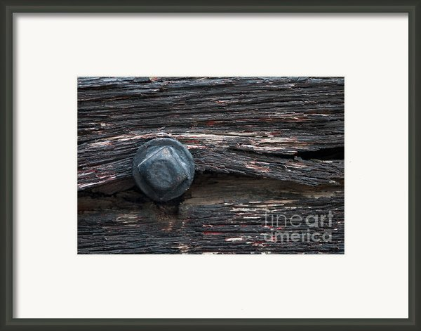 Still Holding On Framed Print By Dan Holm