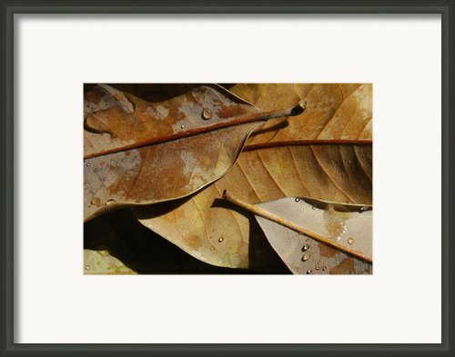 Still Leaf Framed Print By Dan Holm