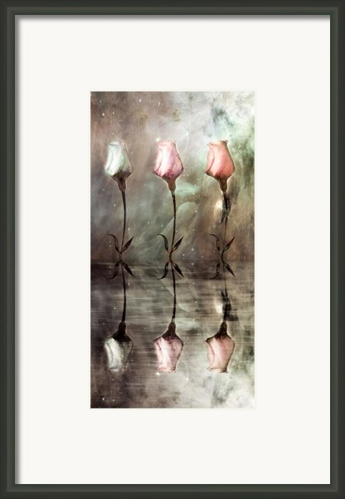 Still Framed Print By Photodream Art