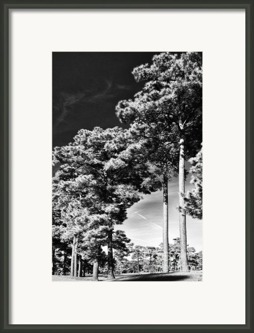 Stillness Framed Print By Gerlinde Keating - Keating Associates Inc