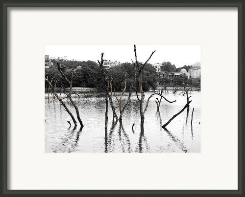 Stomps Of Trees In A Lake Framed Print By Sumit Mehndiratta