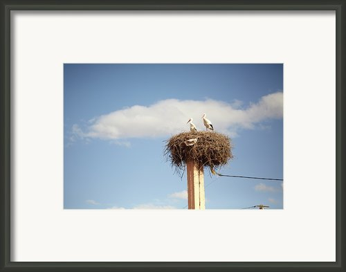 Storks Framed Print By Copyright Adrianko