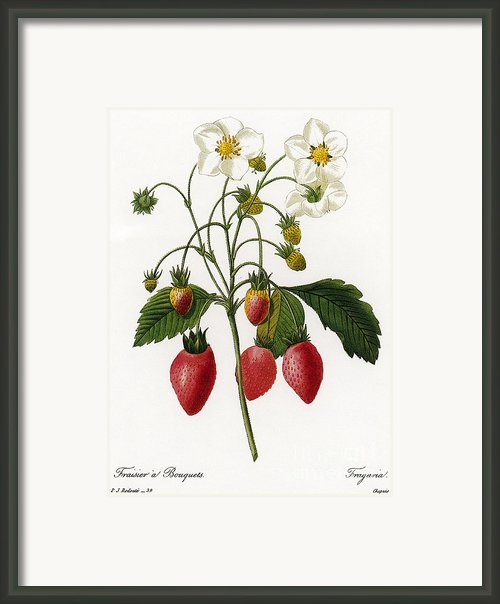 Strawberry Framed Print By Granger