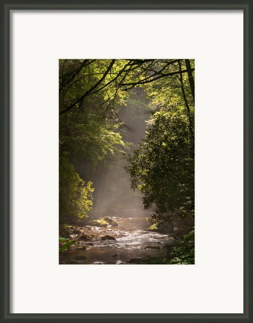 Stream Light Framed Print By Steve Gadomski