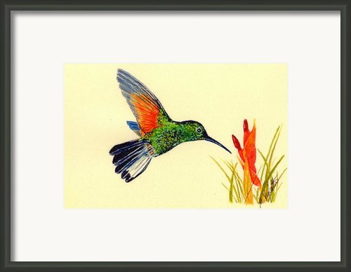Stripe Tailed Hummingbird Framed Print By Michael Vigliotti