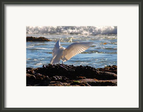 Strut Framed Print By Clayton Bruster