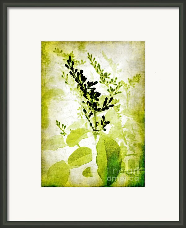 Study In Green Framed Print By Judi Bagwell