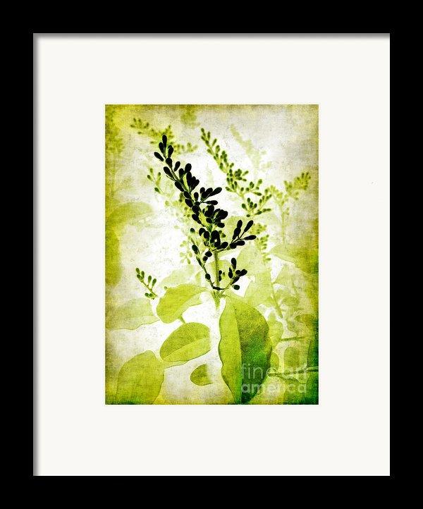 Study In Green Framed Print By Judi Bagwell