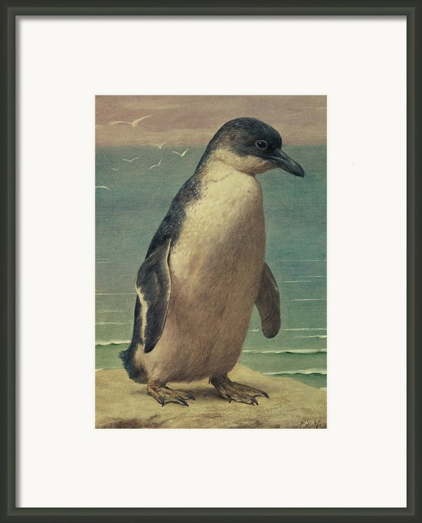 Study Of A Penguin Framed Print By Henry Stacey Marks