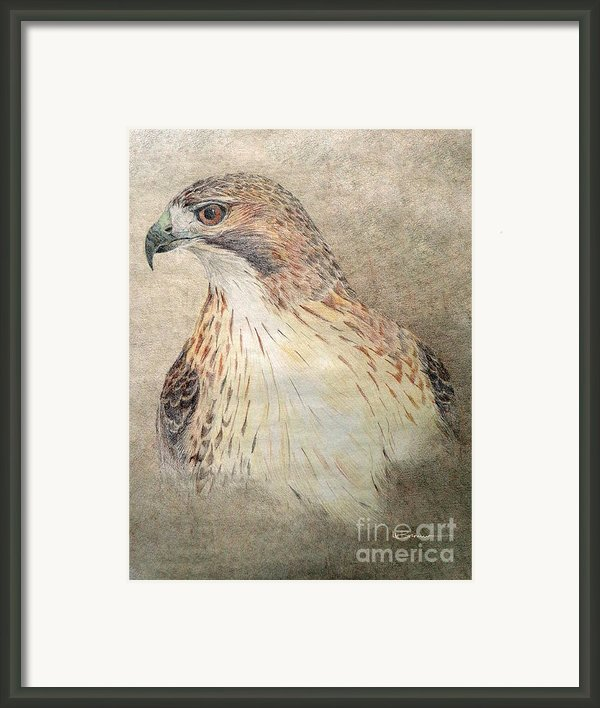 Study Of The Red-tail Hawk Framed Print By Leslie M Browning
