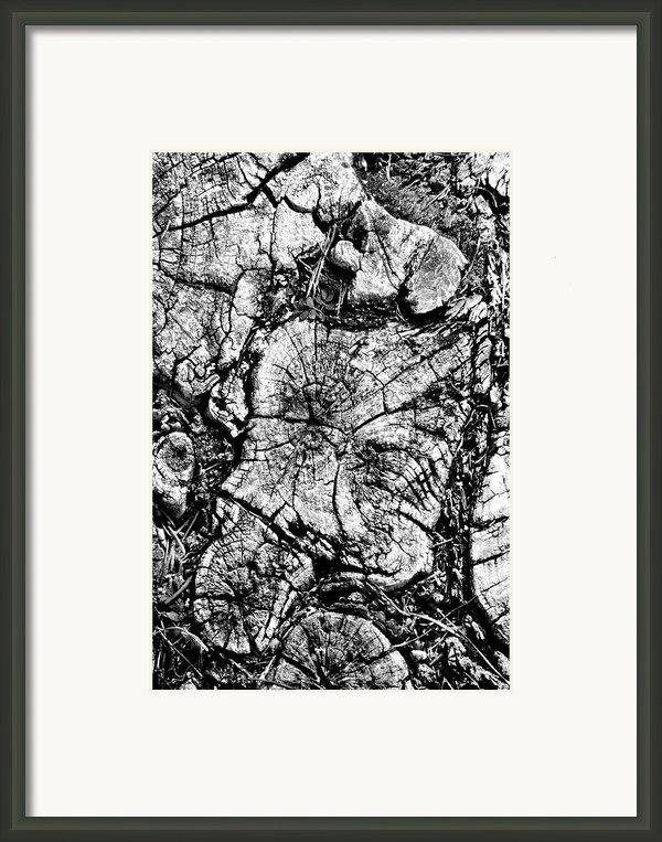 Stumped Framed Print By Mike Mcglothlen