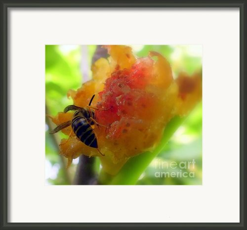 Succulent Fig Framed Print By Karen Wiles